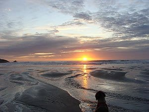 labradoodle on the oregon coast