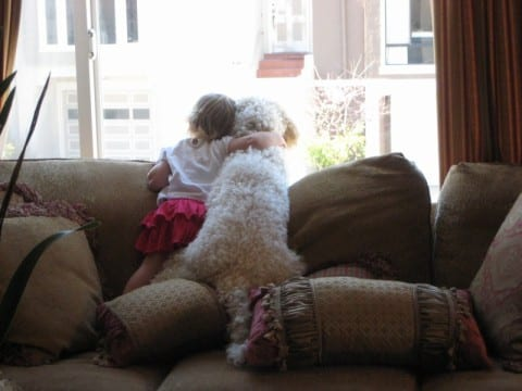 family dog labradoodle great with children